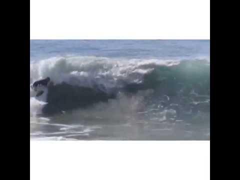Team Rider Nick Holdman getting some waves!