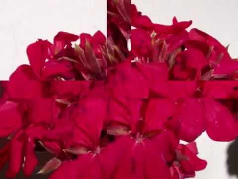 Tema de Amor :Romeo&Juliet-Richard Clayderman /Ed.Susanalake-Audio Original Censurado por YT