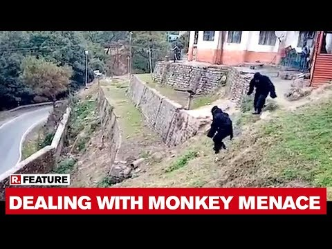 Viral Video: ITBP personnel dress in Bear costumes to scare away Monkeys