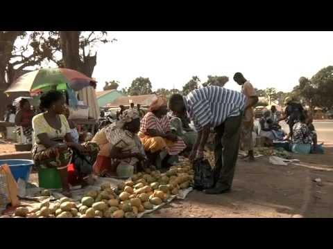 Caju, a fruta de Bissau