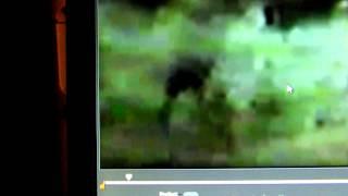 "M.K.Davis discusses the ""Junk Man"" video"