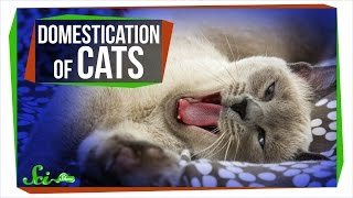 Where Do Domestic Cats Come From?