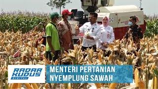 Bupati Grobogan Sentil Menteri Pertanian Soal Impor Jagung