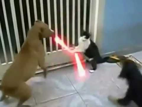 Dogs With Lightsabers