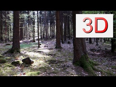 3D Video 4K, UHD: The Forest is Free