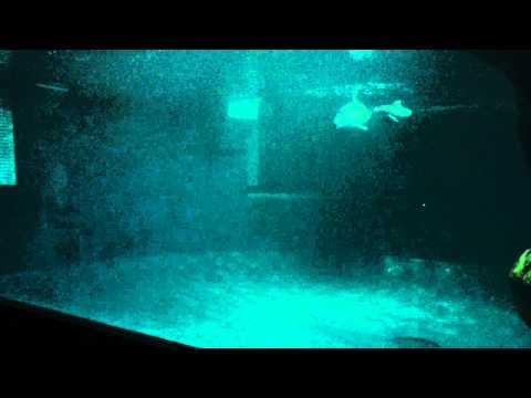 New dolphin calf at Shedd Aquarium