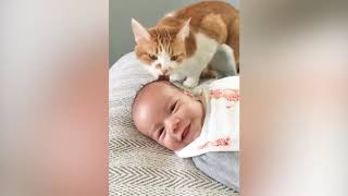 Funny Baby and Cat Compilation Video