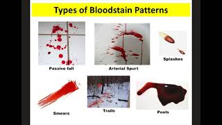 Blood Spatter Notes Forensics