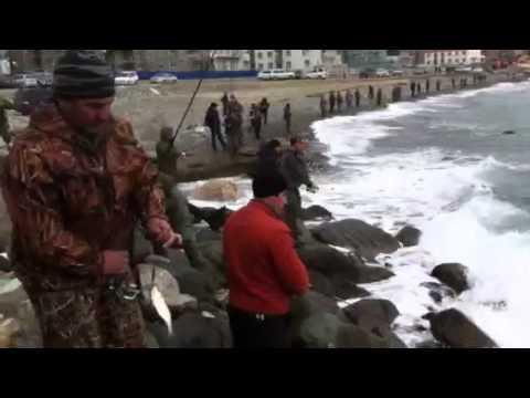 Рыбалка на лифера  в Сочи