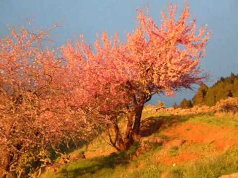 Canarias - Vivo en un archipielago