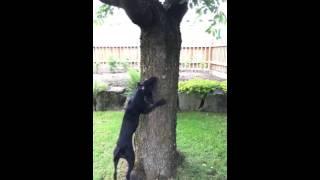 Jurio je vjevericu, a onda je ispao pravi glupan (VIDEO)
