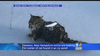Firefighters Save Frozen Cat Stuck To Icy Pond