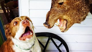 Funny Cats 😹 And Dogs 🐶 Videos - Try Not To Laugh Challange!