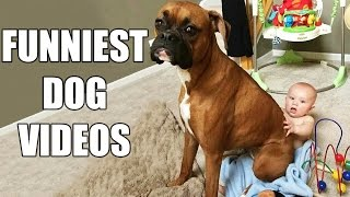 *Try Not To Laugh Challenge* Funny Dogs Compilation [MUST SEE] Funny Dog Videos & Vines 2016 - YouTube