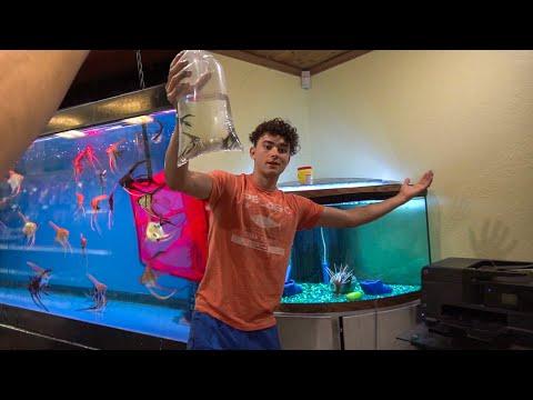 Getting The MOST BEAUTIFUL AQUARIUM FISH!