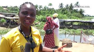 SHOCKING: Nigeria's Crocodile Meat Market