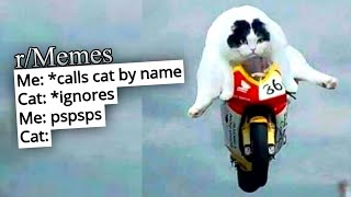 r/Memes | memes for CATS ONLY!!!