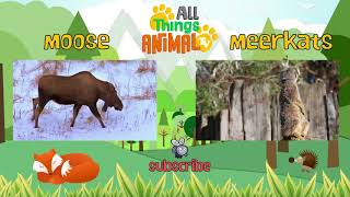SPIDERS and more: SCARY ANIMALS PLAYLIST. Animals for children. Kids videos. Preschool lea