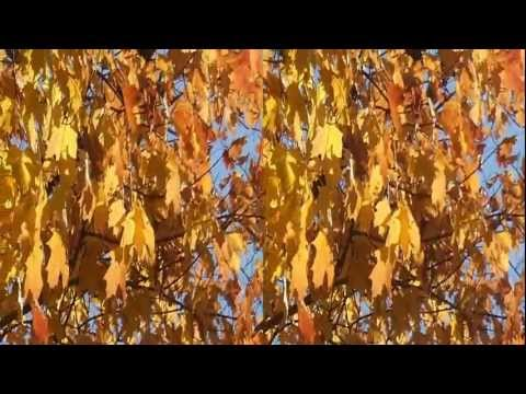Sleepy Hollow Fall Foliage - 3D Video