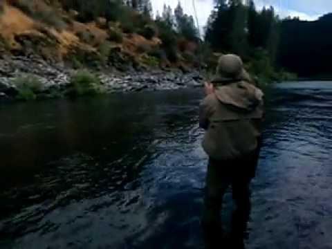 Upper Sacramento Fall Fly Fishing Guide & Report