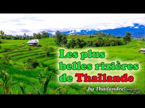 les plus belles rizières de thaïlande