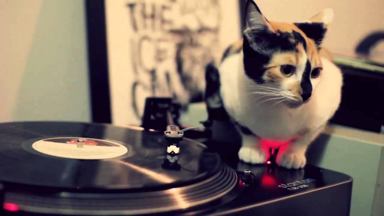 DJ Cat - YouTube