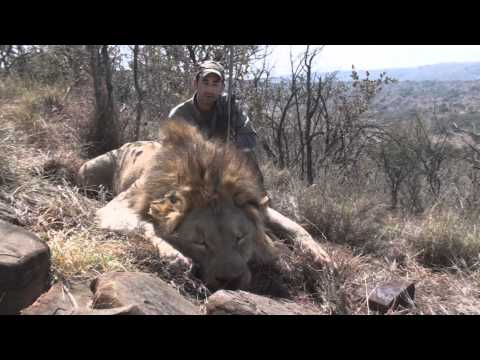 Lion by Jeremy with Hunting Legends