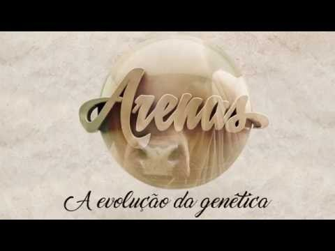 Projeto ARENAS - Por Fabio Mizia...