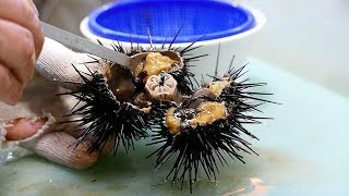 Korean Street Food - SEA URCHIN Sashimi Bowl Jacky's Seafood Busan Korea