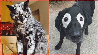 Unique Animals With Vitiligo Who Look Like They're Running Out Of Ink