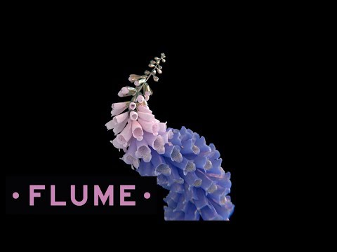 Flume - Take a Chance feat. Little Dragon