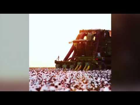 SAFRA 2020 - Colheita do algodão em Canarana-MT  Meta Cotton