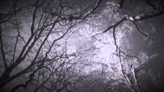 The ghost of hank Williams David Allan Coe