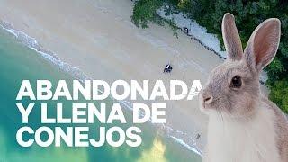 UNA ISLA ABANDONADA Y LLENA DE CONEJOS (JAPÓN) | enriquealex