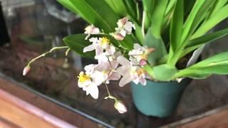 FernCrafts: SOOS Orchid haul-Feb 15, 2019