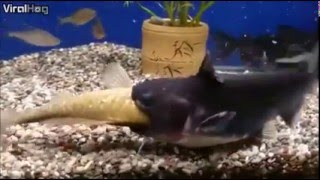 Snimao je svoj akvarijum sa ribicama, a onda se pred njegovim očima počela odigravati scena iz HOROR FILMA (VIDEO)