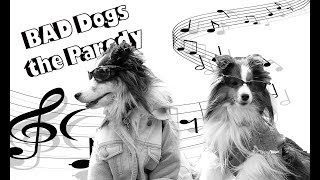 """Bad Dogs! - 🐩Hilarious Song Parody of Taylor Swift's """"Bad Blood"""""""