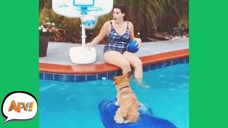 HOWLING For HOOPS! 🐶😆   Funniest Animals   AFV 2020