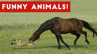 Funniest Pet & Animal Clips, Bloopers & Moments Caught On Tape Weekly Compilation | Funny Pet Videos
