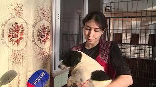 Крупную партию благотворительной помощи сегодня передали в муниципальный приют Омска