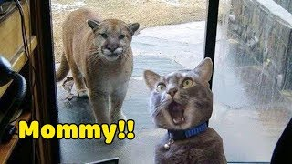 Funniest Animals 2020 Compilation - Awesome Funny🐶 Dogs and 😻 Cats