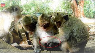 A lot of mums visit new baby crying they concern too much Youlike Monkey 749