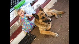 Dog Fighting Kids Laughing   dogs crying over dead owner   funny animal videos