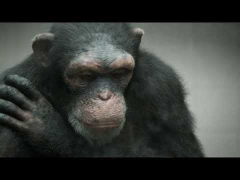 PETA - 98% Human (BBDO New York)