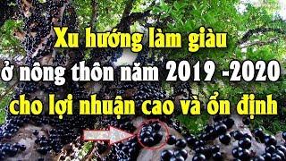 Xu hướng làm giàu ở nông thôn năm 2019 -2020 cho lợi nhuận cao và ổn định | Tài chính kinh doanh