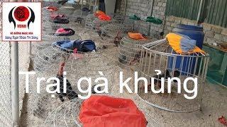 Thăm trại gà chú em ở Hà Nội