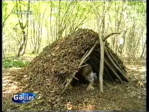 Hutte Im Wald Bauen Anleitung Schau Unter Die Haube