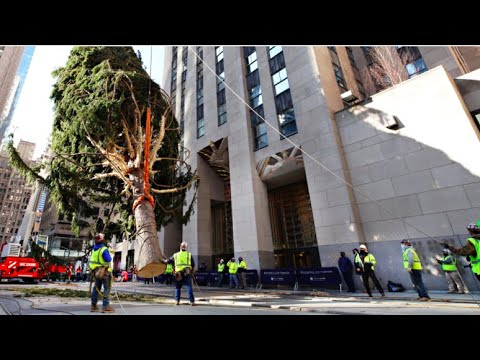 Rockefeller Christmas Tree Makes Big City Debut in Midtown | NBC New York