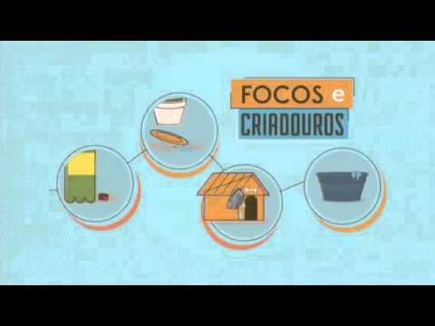 Vídeo Aedes aegypti: SP ressalta importância de eliminar criadouros em casa; assista o vídeo