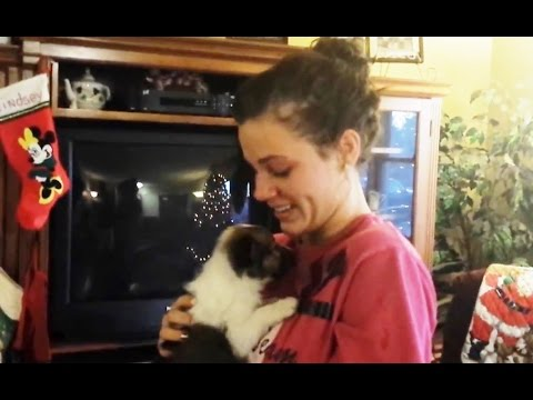 Christmas Puppy Surprise Compilation 2015 - 2016 [NEW]